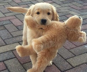 dog, puppy, and teddy image
