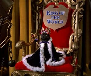 cat, king, and salem image