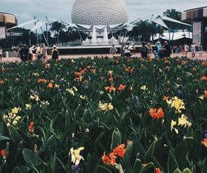 disney, drinks, and flowers image