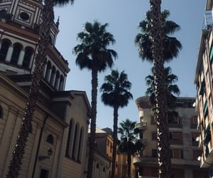 italy, palmtrees, and summer image