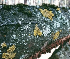 forest, wood, and moss image