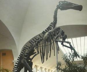 museum, skeleton, and spb image