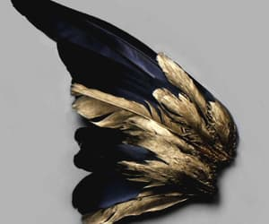 gold, black, and feathers image
