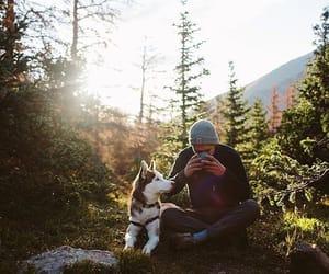 cup, husky, and light image