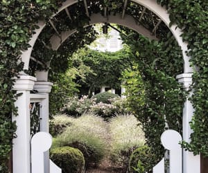 aesthetics, garden, and landscape image