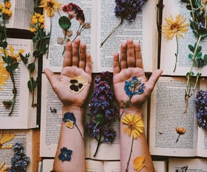 aesthetics, literature, and novels image