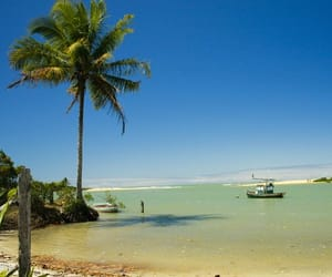 bahia, brazil, and nature image