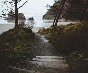 beach, green, and nature image