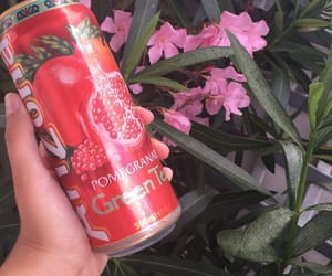 arizona, flowers, and icetea image