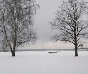 Baltic Sea, tree, and winter image
