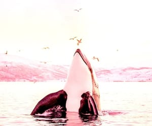 animal, whale, and pink image