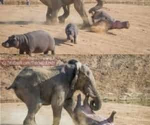 awesome, funny, and hippo image