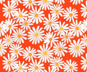 daisy, patterns, and old image