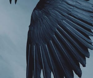 crow, blue, and ravenclaw image