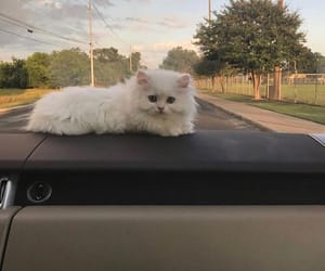 cat, nature, and travel image