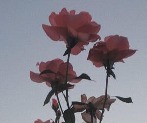 alternative, elegant, and floral image