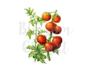 png, printable, and tomato sauce image