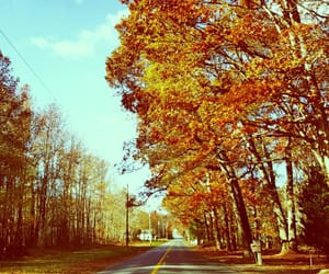 autumn, travel, and color image