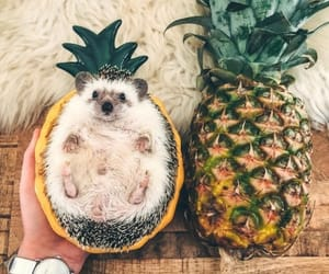 animal, fruit, and cute image