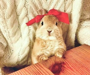 rabbit, red, and cute image