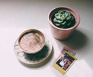 coffee, plant, and vintage image