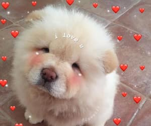 aesthetic, dog, and heart image