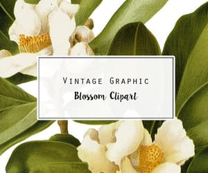 botanical, watercolor flower, and clipart flower image