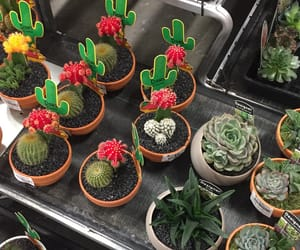 aesthetic, cacti, and cactus image