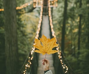 autumn, leaves, and fall image