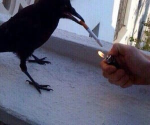 cigarette, bird, and smoke image
