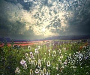 belleza, flores, and campo image