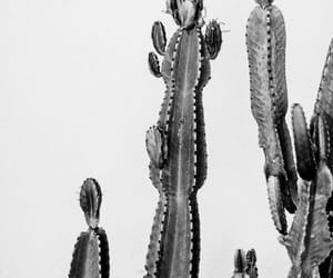 black, cactus, and black and white image