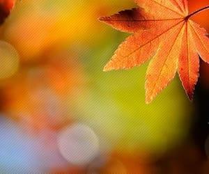 animals, autumn, and books image