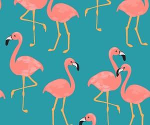 background, flamingo, and summer image