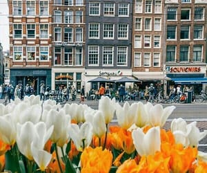 amsterdam, article, and delft image
