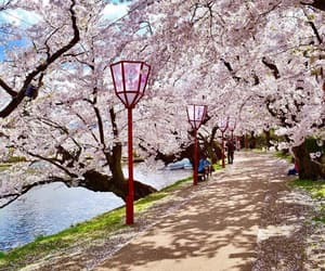 blossom, trees, and wander image