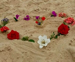 beach, beautiful, and flowers image