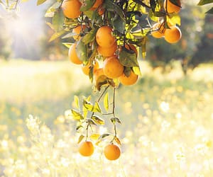 nature, orange, and photography image