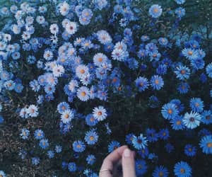 blue, cold, and flowers image
