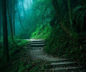 fantasy, path, and woods image