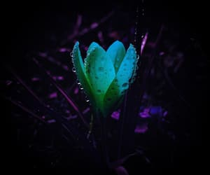 amazing, neon, and water drops image
