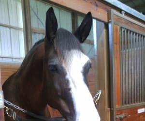 animal, toby, and horseback riding image