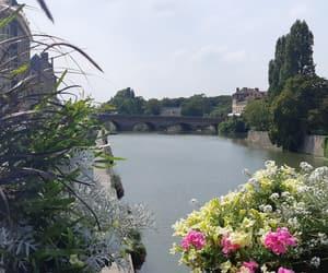 bridge, flower, and france image