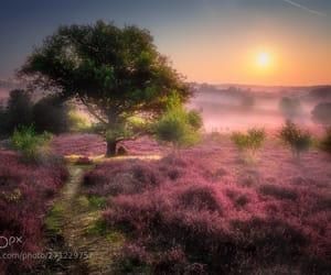 colors, dutch, and haze image