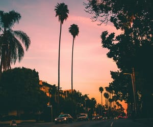 sunset, city, and palm tree image