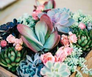 grow, plants, and pretty image