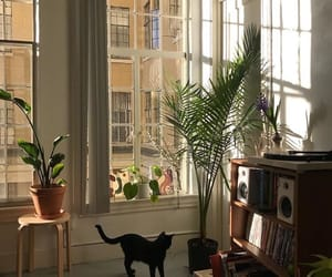 cat, home, and plants image