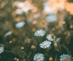 beauty, flower, and day image