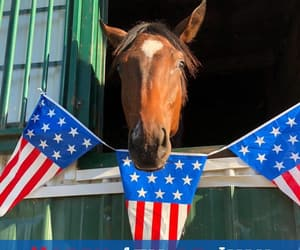 4th of july, horse, and horses image