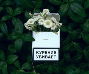 aesthetic, сигареты, and cigarette image